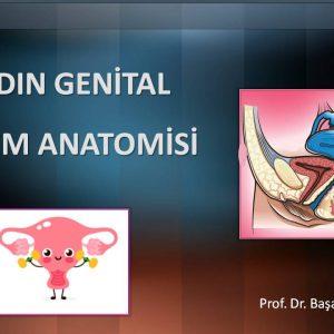 Kadın Genital Sistem Anatomisi